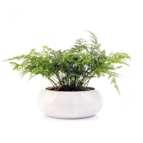 Cachepot-bowl-201