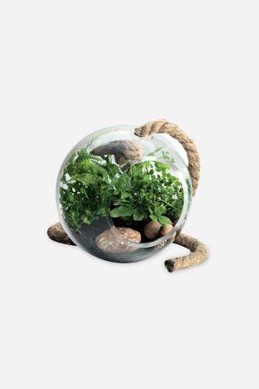 Terrario-pendente-bola-vidro-g-201