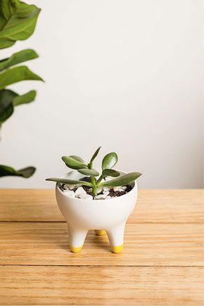 Vaso-raiz-amarelo-g-201
