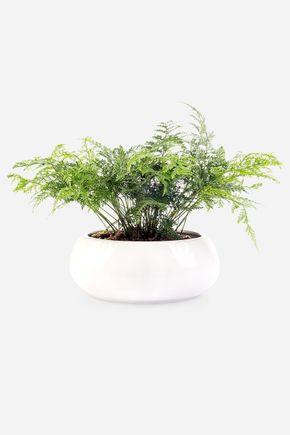 Cachepot-bowl