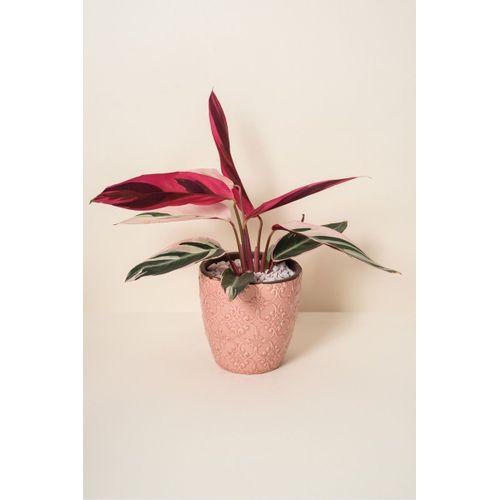 Vaso-vermelho-boho