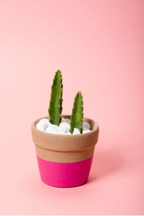 Vaso-ceramica-rosa