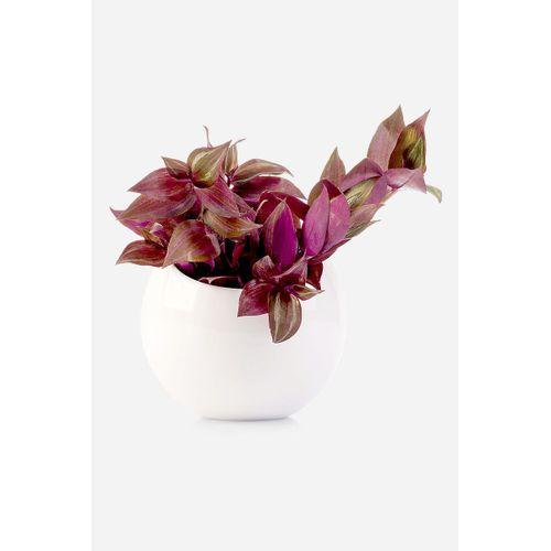 Floreira-parede-ball