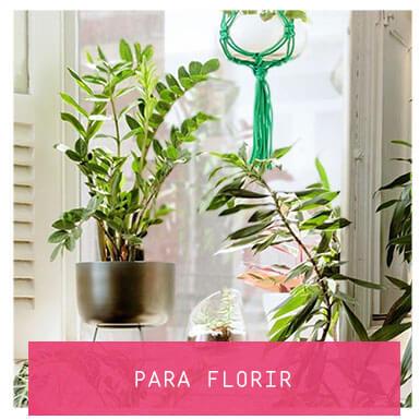 para-florir-banner
