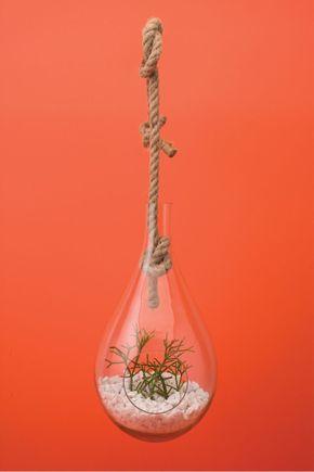 Terrario-pendente-ninho