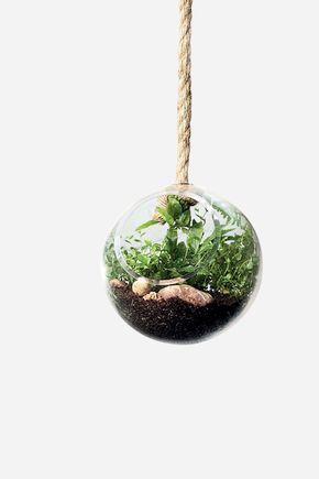 Terrario-pendente-bola-vidro-m