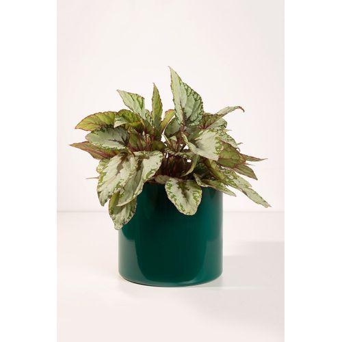 Vaso-cachepot-aluminio-verde-m