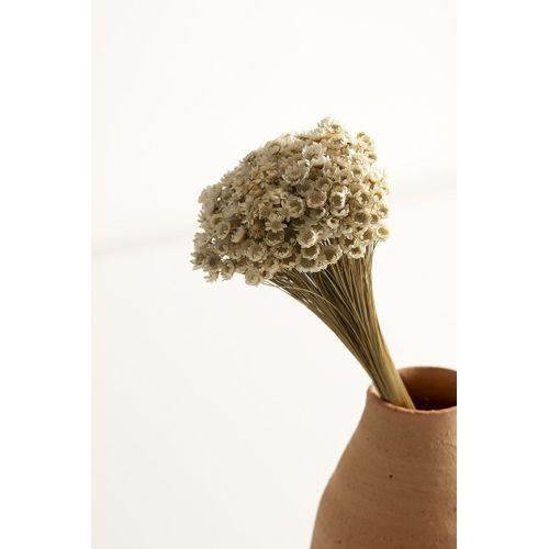 Flor-seca-sempre-viva-cabo-mole-natural