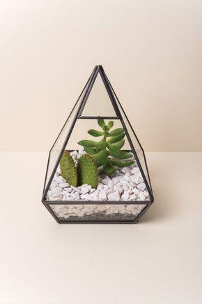 Terrario-piramide