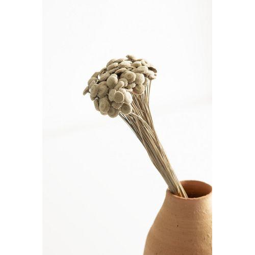 Flor-seca-botao-aveludado-natural