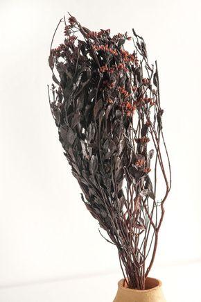 Flor-seca-assa-peixe-vermelho