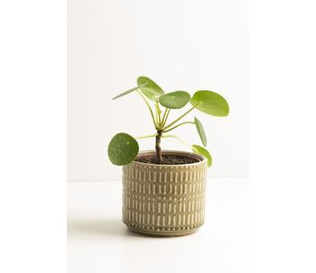 Conjunto-2-cachepots-oliva