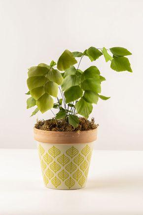 Cachepot-folhas