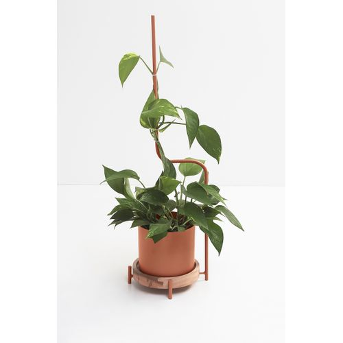 Vaso Cachepot com Guia Para Plantas Terracota