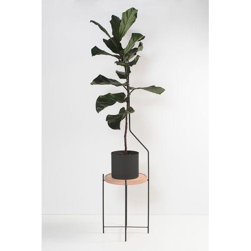 Mesa Guia Para Plantas Preta
