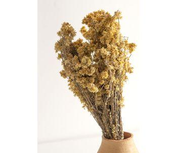 Flor-seca-marcela-natural