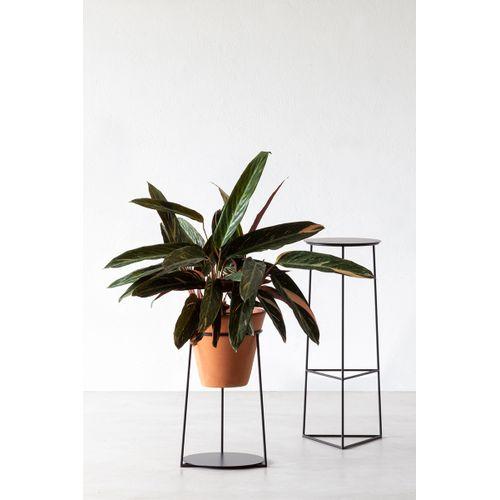 Suporte Botânico Hera Grande (Sem Vaso)