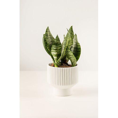Vaso-Ceramica-com-Base-Branco